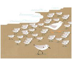 Sanderlings, Doug Ross