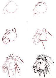 Resultado de imagen para dibujos de la zoologia