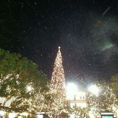 Aaaand Snow wraps up my 24 hours at the Americana. GOODNIGHT.
