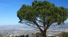 Best Los Angeles Hikes, Beaches, and Other Outdoors