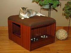 Cats : SuperCoolPets.com - Super Cool Pets