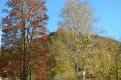 Durch das grüne, gelbe, rote und orange Blätterdach der #Bäume strahlt der #Himmel im #Herbst doppelt so blau