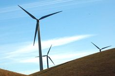 Birds and Wind Turbines