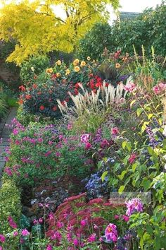 If you want to make a perennial cottage garden, these are the plants you should grow! #FlowerGarden