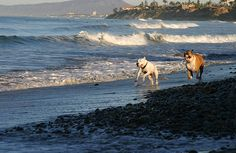 Dog Beach - Let your dog run on the  beautiful beaches of Del Mar! Through Labor Day furry friends are allowed leashed on the beaches North of 29th Street and South of Powerhouse Park to 6th Street.