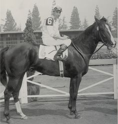 """""""Miss Meyers, one of the earliest stars of American Quarter Horse Racing, was a champion on the track and one of the founding broodmares of racing American Quarter Horses."""" Miss Meyers was inducted into the Hall of Fame in 2009. Learn more about the AQHA Hall of Fame inductees at http://aqha.com/Foundation/Museum/Hall-of-Fame/Hall-of-Fame-Inductees.aspx ."""
