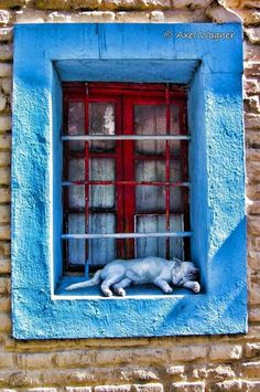 Cat window