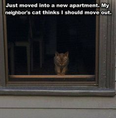 Funny Pictures Package Of The Day 38 Pics Funny Picture Quotes, Funny Pictures, Funny Pics, Funny Stuff, Funny Animals, Cute Animals, Cat Whisperer, Laugh At Yourself, Moving Out