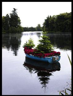 "What to do with that old rowboat. Turn it into a ""water garden"""