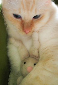 .Kitties are so darn cute. Don't you just want to sniff this baby's neck?