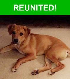 Great news! Happy to report that Tucker has been reunited and is now home safe and sound! :)