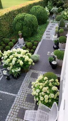 House Landscape, Landscape Designs, Wisteria Tree, Privacy Hedge, Raised Garden Beds, Raised Bed, Starting A Garden, Garden Projects, Garden Ideas