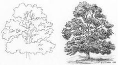 how to draw realistic shrubs - Google Search