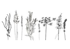 Portmeirion competition deadline is very soon, so I've been scanning in my drawings today and playing around with arrangement. Inspired by flowers and plants found in the hedgerows in Cornwall, which can also be found in the garden. Placing plants that are otherwise ignored due to being weeds into the spotlight. I like the idea of arranging flowers in an unnatural way, as if they're on an operating table.