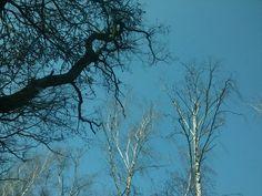 #Drzewa#Niebo