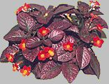 Strawberry Patch Strawberry Patch, Patches, Wreaths, Fall, Home Decor, Stuff Stuff, Plants, Places, Autumn