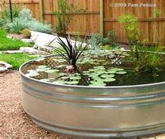 stock tank water garden... working on this one