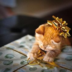 I would love to find this little cutie on Christmas morning <3