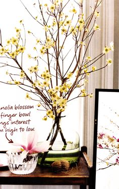 displaying spring branches