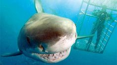 Now that's one friendly looking shark!