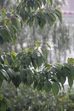kesä ja sade, summer and rain