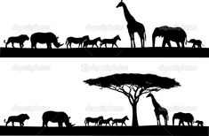 african tree silhouette   Vector of a typical African tree in silhouette. For the jpg-version