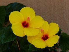 #HOTELS #SWD #GREEN2STAY MAUI COAST HOTEL  A small token to brighten up your work week.