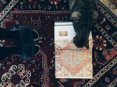. >>> Educating Eva (the cat) on the art of reading rug patterns. I think I'm going to start a little picture series, explaining the stories each rug tells.  . . . #storytime #glasgow #vintagerug #rugs #persian  #persianrug #persianrugs #bohostyle #vintagestyle #vintage #bohemian #glasgowvintage #interiors #interiordesign #midcentury #bohemianstyle #vintagefurniture #styleitdark #edinburghvintage #livingroomdecor #homesweethome #instahome #myhomestyle #darkinterier #livingroominspo…