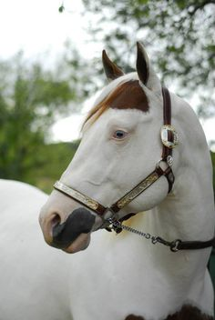 966a198b913 17 Best Medicine Hat Horses images