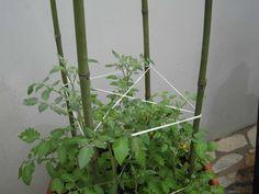 Suporte tomateiro em vaso
