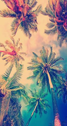 colorful, ios, iphone, palm trees, summer, wallpaper, iphone 6