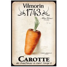 Vilmorin 1743 - Carotte