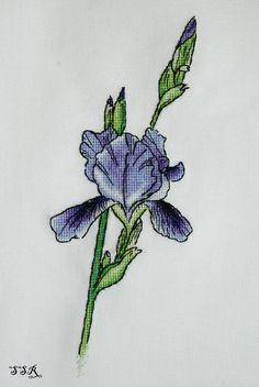 Single Stem iris.