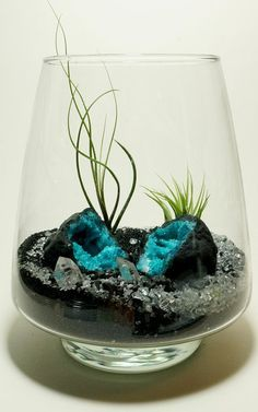 Add a unique terrarium to your room with this one-of-a kind terrarium. Terrariums come with easy to follow YouTube videos which show you how to assemble your terrarium in less than 10 minutes. Maintenance is easy, simply soak your air plant 2-4 times a month. Price includes UPS shipping, only available in the United States.