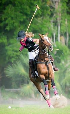 Polo horse, bids start at 24,000