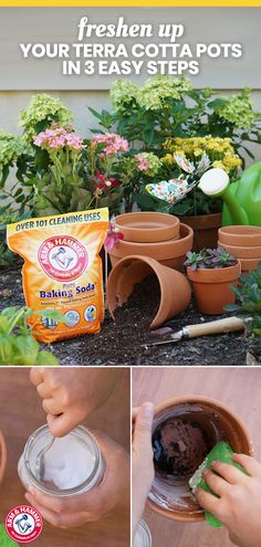 Give your terra cotta pots a fresh new look with this simple, ARM & HAMMER™ Baking Soda scrub. Mix 3 parts ARM & HAMMER™ Baking Soda and 1 part water. Apply the paste to a sponge and scrub inside the pot. Make sure to rinse the pots once more after Garden Crafts, Garden Projects, Garden Ideas, Container Gardening, Gardening Tips, Organic Gardening, Gardening Zones, Baking Soda Scrub, Pot Jardin