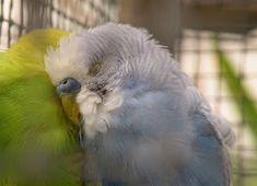 Sweet, little birds