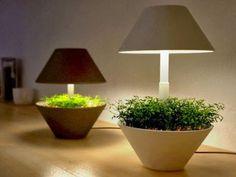 Lightpot, Plantas De Diseño Para Rincones Con Poca Luz