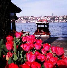 #Tulips next to #Bosphorus | Τουλίπες στο Βόσπορο