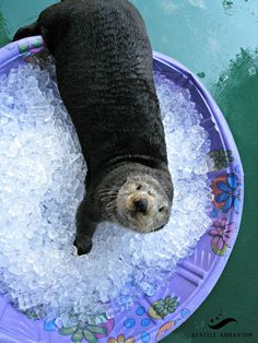 "Otter:  ""Hey!  I thought you said there were some fish in here?!"""