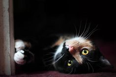 Aurora being cute :) by HollyRuthven on Flickr