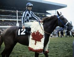 Secretariat after his final race at Woodbine (Canada). Eddie Maple up.