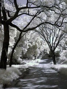 infrared 72 by *sanddragon on deviantART