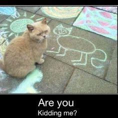 Funny cute cat.
