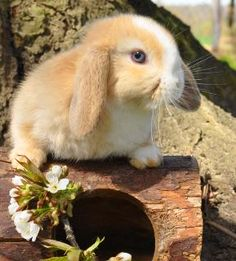 Zwergkaninchen vom Kaninchenhof