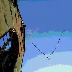 Pássaros partindo para um lugar mais quente. Koln - Alemanha