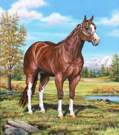 Champion stallion horse 2000
