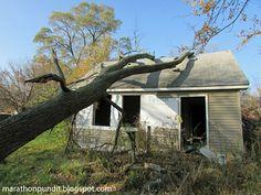 Fallen tree on abandoned Brightmoor home