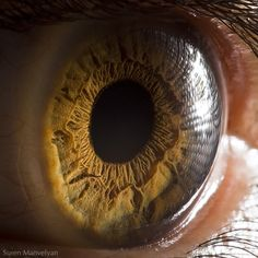 Detailed photos of the human eye ...