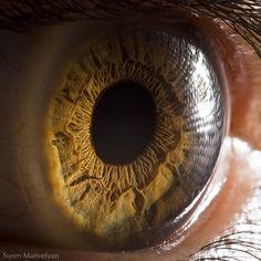 macro oeil yeux 02 Les yeux dans le détail
